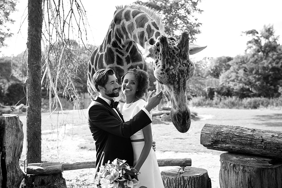 Ein Brautpaar steht vor einer Giraffe