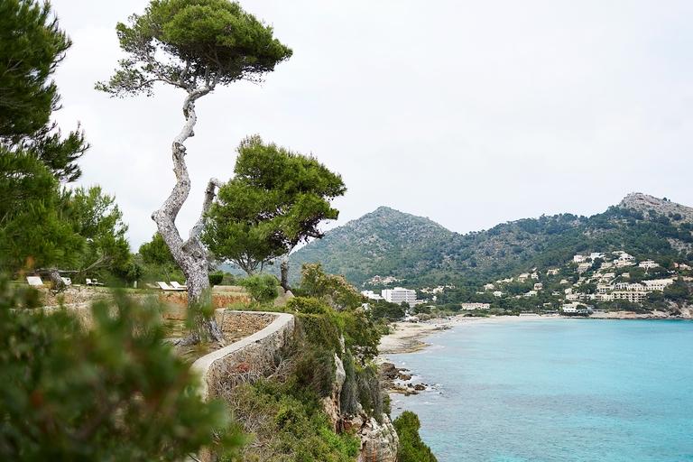 Ein Baum am Meer auf Mallorca