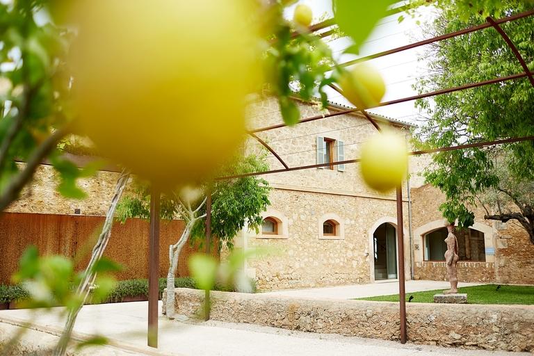Eine Finca durch einen Zitronenbaum fotografiert